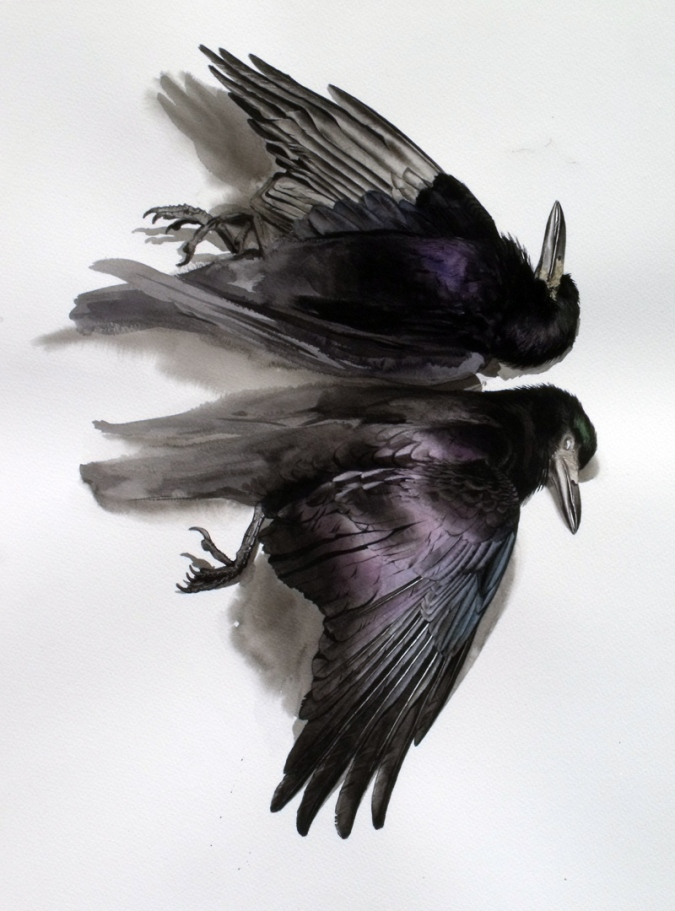 Studies of a Dead Rook