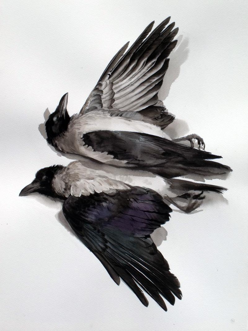dead birds  u2013  benwoodhams com