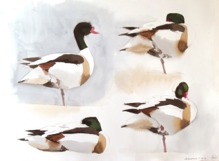 Four Shelduck, Salthammer