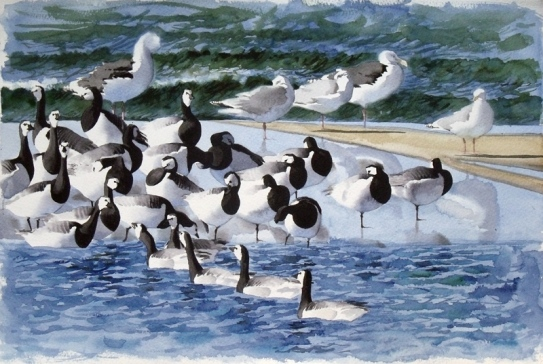 Barnacle Geese and Gulls, Dueodde Lagoon