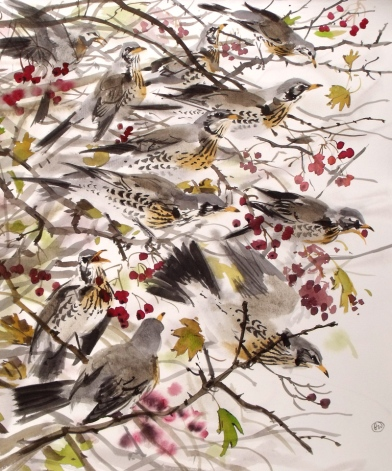Fieldfares in Rowan