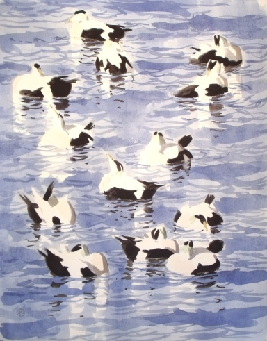 Eiders preening (sold)