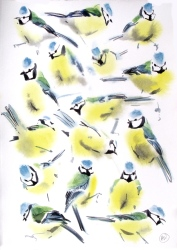 Blue Tit Studies