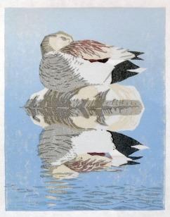 Duck print - Gadwall