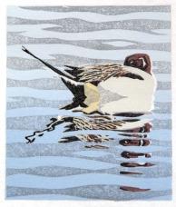 Duck print - Pintail