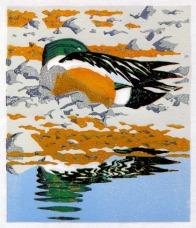 Duck print - Shovellor