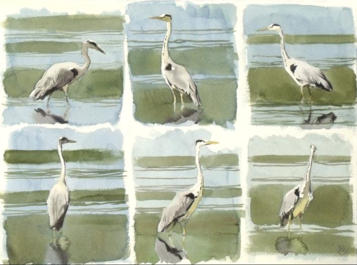 Six Heron Studies, Udkæret