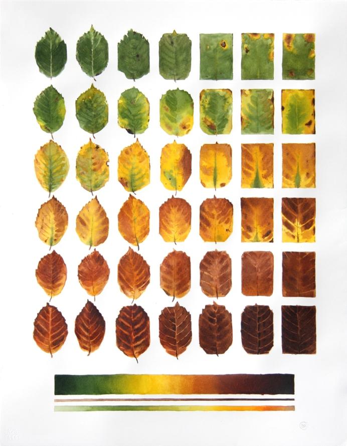 Beech Leaf Progression