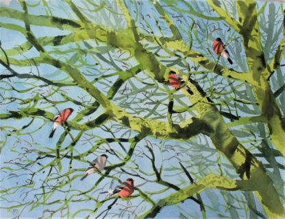 Bullfinches, Ekkodalen (sold)