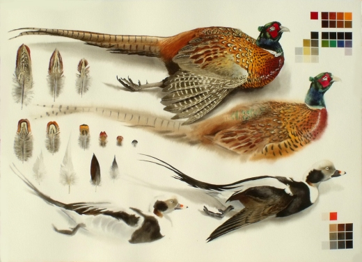 Studies of Dead Cock Pheasant and Long Tailed Drake (sold)