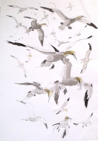 Gannets flying over Bass Rock (sold)