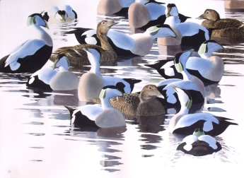 Active Eider Group
