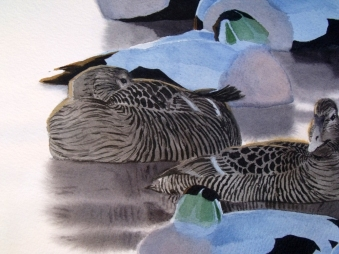 Sleeping Eiders, detail