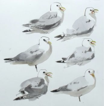 Kittiwake Studies
