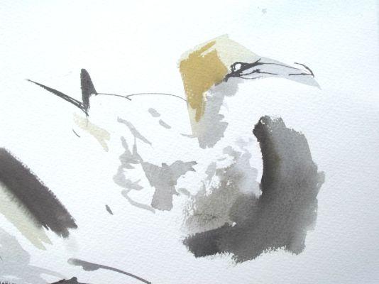 Gannet Sketch, Bass Rock