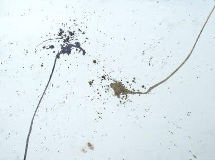 Sandhopper paintings