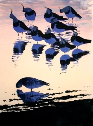Lapwings at Dusk, Udkæret
