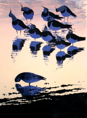 Lapwings at Dusk, Udkæret (sold)