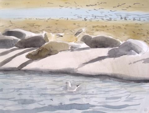 Hauled out Seals at Fanø