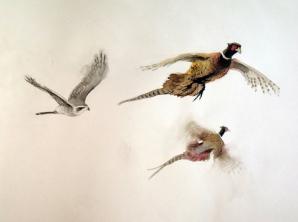 Goshawk and Pheasants