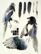 Studies of Dead Magpie (sold)