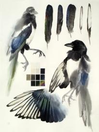 Studies of Dead Magpie