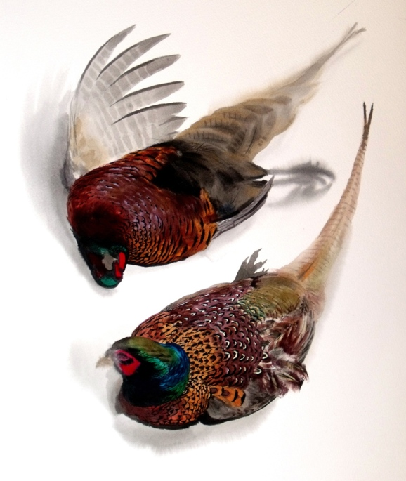 Studies of a Dead Cock Pheasant