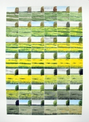 Oilseed Rape Ripening (sold)