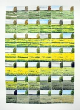 Oilseed Rape Ripening
