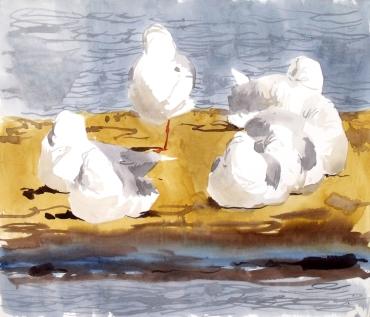 7 Sleeping Black Headed Gulls