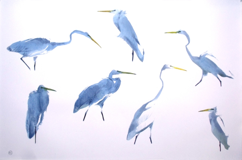 Seven Great White Egrets
