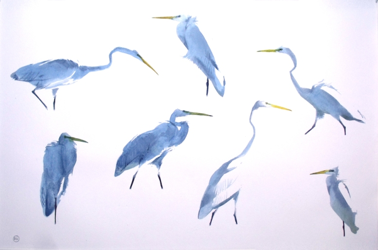Seven Great White Egrets