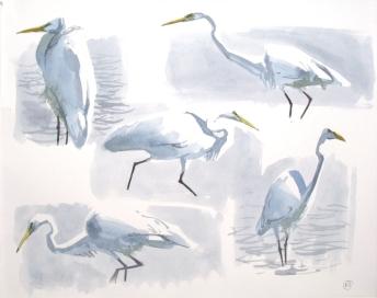 5 Great White Egrets