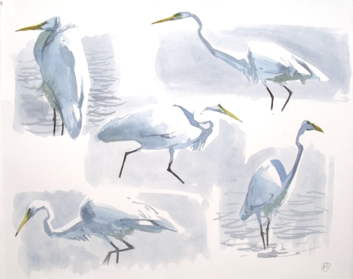 5 Great White Egrets