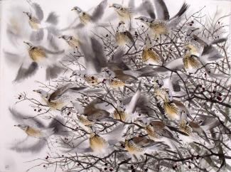 Sparrowhawk?