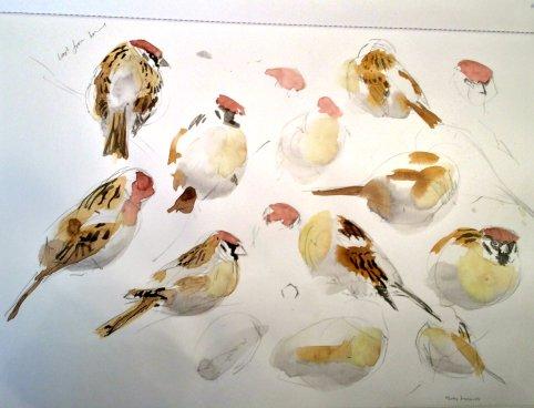 sparrows3