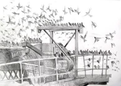 bam starlings
