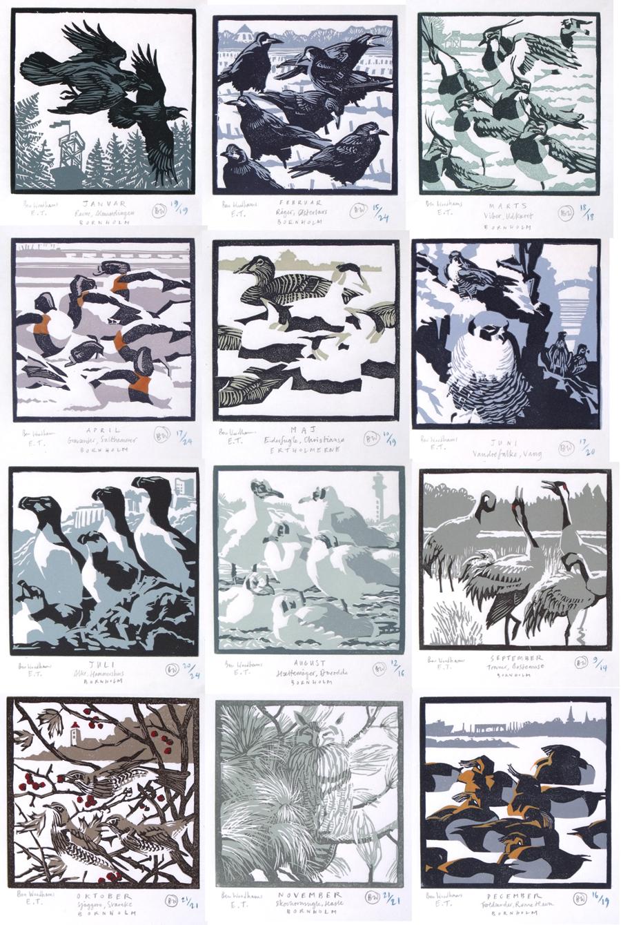 bird of the month - all twelve