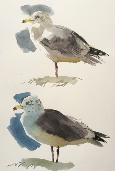 KYST 42.06 Herring Gull Studies (sold)
