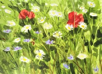 Wild flowers, June