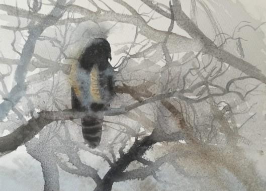 Icy Buzzard, Vestermarie