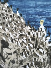 Gannets taking over at St Abbs, Scotland