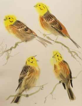 Yellowhammer studies