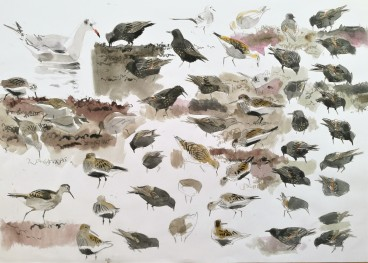 Various Feeding Birds, Salthammer