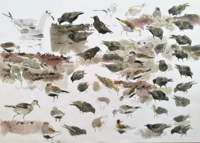 Various Feeding Birds, Salthammer