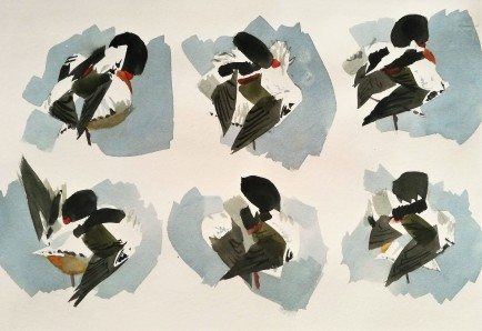 Shelduck throwing shapes (sold)