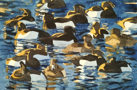 Tufted Ducks on Icy Water, Rønne (sold)