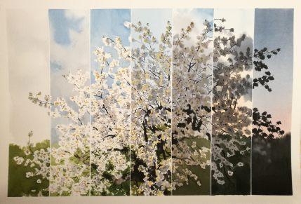 Cherry tree, sunset (sold)
