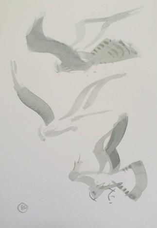 Pallid harrier studies (sold)