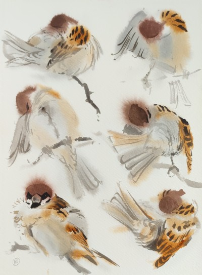 Preening Tree Sparrows III, Vestermarie, Bornholm